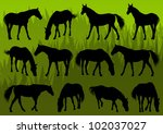 sport and farm horse detailed... | Shutterstock .eps vector #102037027