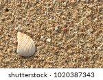 fossil shell on the sand beach  ... | Shutterstock . vector #1020387343