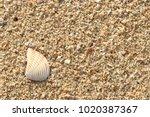 fossil shell on the sand beach  ... | Shutterstock . vector #1020387367