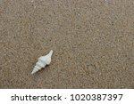 fossil shell on the sand beach  ...   Shutterstock . vector #1020387397