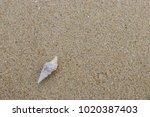 fossil shell on the sand beach  ... | Shutterstock . vector #1020387403