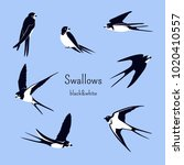 simple swallows on a light blue ... | Shutterstock .eps vector #1020410557