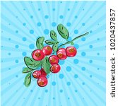 cranberries with leaves on a... | Shutterstock .eps vector #1020437857