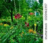 the garden in the clos normand... | Shutterstock . vector #1020461557