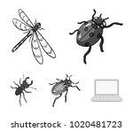 arthropods insect ladybird ...   Shutterstock .eps vector #1020481723
