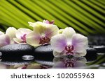 Beautiful branch orchid with palm leaf on pebbles - stock photo