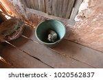 madagascar everyday life  ... | Shutterstock . vector #1020562837