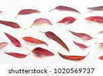 directly above view of red... | Shutterstock . vector #1020569737