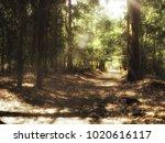 light thru the trees | Shutterstock . vector #1020616117