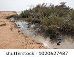 desert lake in ras mohammed...   Shutterstock . vector #1020627487