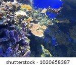 aquarium saltwater coral reef... | Shutterstock . vector #1020658387