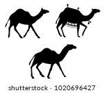 silhouettes of camels. animals... | Shutterstock .eps vector #1020696427