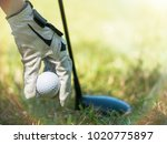 female hand with golf glove... | Shutterstock . vector #1020775897