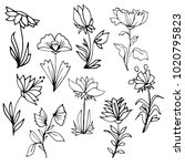 hand drawn flowers with leaves... | Shutterstock .eps vector #1020795823