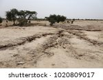 arid landscape in north senegal.... | Shutterstock . vector #1020809017