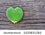 Hoya Kerrii Is Tree Have...