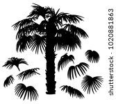 set of palm leaves silhouettes...   Shutterstock .eps vector #1020881863