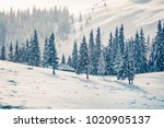 snowy winter day in the... | Shutterstock . vector #1020905137