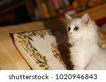 cat sit on sofa scene.   Shutterstock . vector #1020946843
