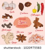 hand drawn colorful culinary... | Shutterstock .eps vector #1020975583