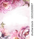 watercolor light pink  rose... | Shutterstock . vector #1021020007