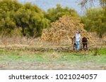 country farming scene in rural... | Shutterstock . vector #1021024057