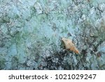 fossil shell on the sedimentary ... | Shutterstock . vector #1021029247