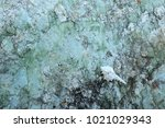 fossil shell on the sedimentary ... | Shutterstock . vector #1021029343