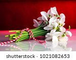 snowdrops  1st of march... | Shutterstock . vector #1021082653