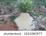 Brown Water Puddle.