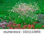 flowers and lawns   | Shutterstock . vector #1021113853