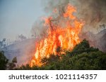 fire in a pine forest in... | Shutterstock . vector #1021114357