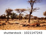 drought and famine   dead... | Shutterstock . vector #1021147243