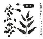 neem. leaves  fruit  root  bowl.... | Shutterstock .eps vector #1021172047