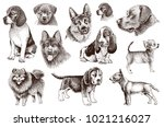 graphical brown color set of... | Shutterstock . vector #1021216027