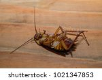 dead cockroaches in an... | Shutterstock . vector #1021347853
