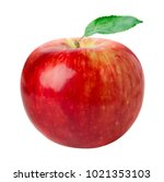 close up view of red ripe apple ... | Shutterstock . vector #1021353103