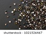 job's tears   coix lachryma... | Shutterstock . vector #1021526467