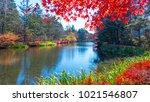 the beautiful maple season at... | Shutterstock . vector #1021546807