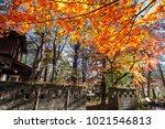 the beautiful maple season at... | Shutterstock . vector #1021546813