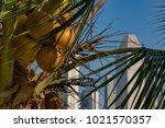 marina bay singapore asia...   Shutterstock . vector #1021570357