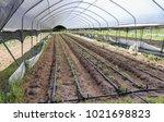 la digue island rural landscape.... | Shutterstock . vector #1021698823