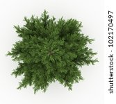 3d Pine  Tree Isolated Over...