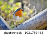 robin on wood | Shutterstock . vector #1021791463