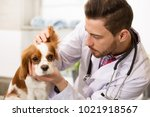 Small photo of Close up of a young handsome bearded male veterinarian working at his office examining ears of an adorable fluffy spaniel puppy copyspace medicine pet care profession occupation job owner.