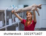 hairless sphinx cat with... | Shutterstock . vector #1021971607