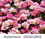 background little pink flowers... | Shutterstock . vector #1022013853