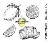 sketches of lemon or lime. hand ... | Shutterstock .eps vector #1022038477