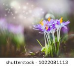 beautiful springtime nature... | Shutterstock . vector #1022081113