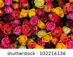 Colorful roses background. Beautiful, high quality, good for holidays, valentines's gift. - stock photo